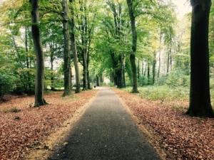 モンキーウォークの歩行効率性と大殿筋活動